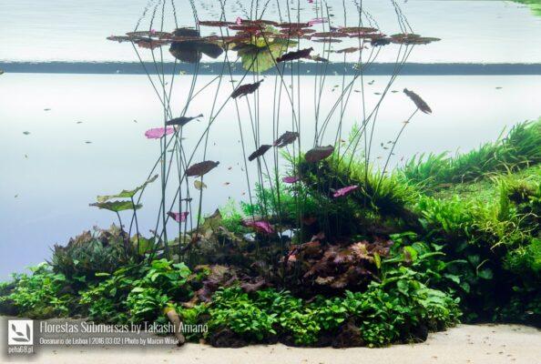 Florestas Submersas by Takashi Amano