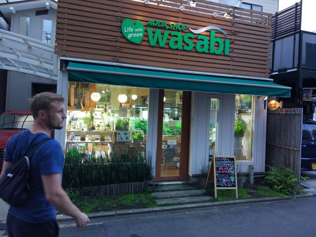 Aqua Shop Wasabi - Kioto