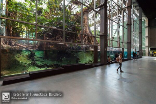 Flooded  Forest – Barcelona