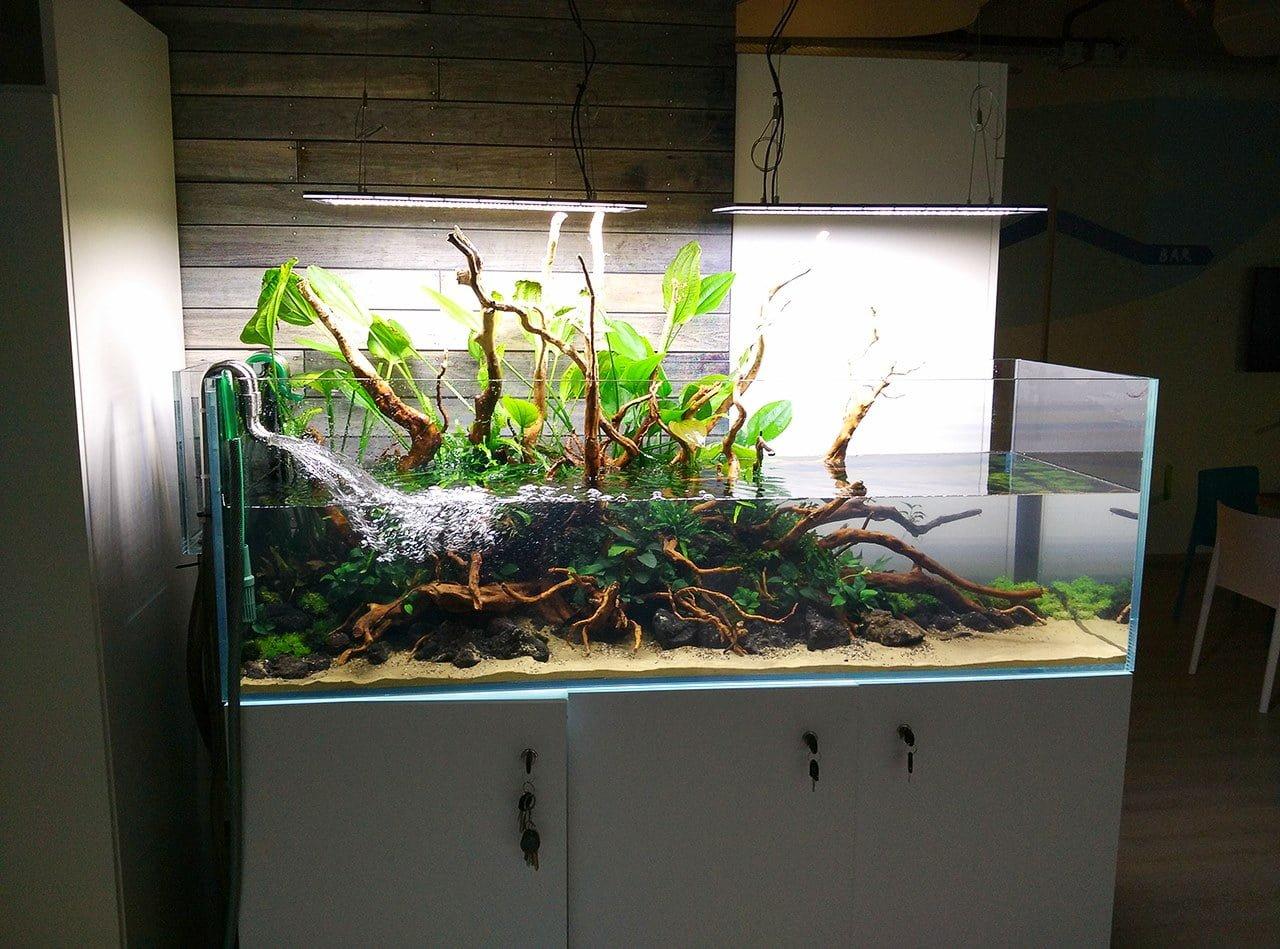 Podmiana Wody W Akwarium Peha68 Akwarium W Stylu Naturalnym