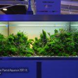 The Art of the Planted Aquarium 2017 – XL