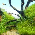 Akwarium naturalne dla początkujących