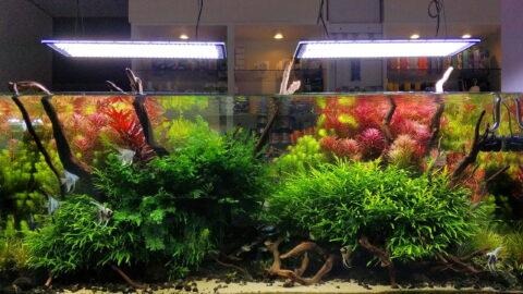 Aklimatyzacja w akwarium