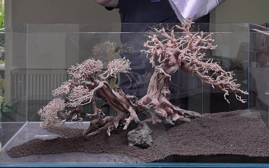 Bonsai w akwarium