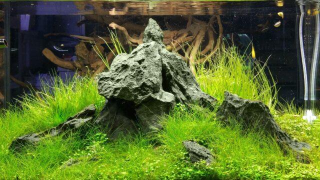 Twardość ogólna w akwarium roślinnym