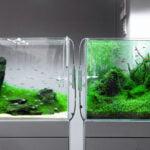 CO2 w akwarium w praktyce